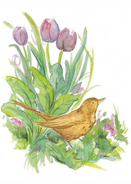 Tulip Blackbird