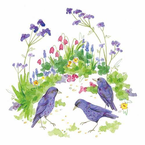 Verbena Starlings