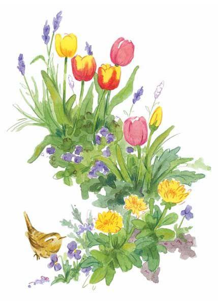 Spring flower Wren