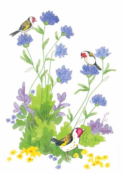 Cornflower Goldfinches