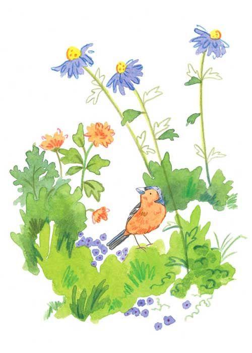 Blue Daisy Chaffinch