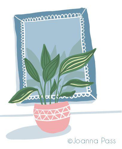 houseplant with mirror