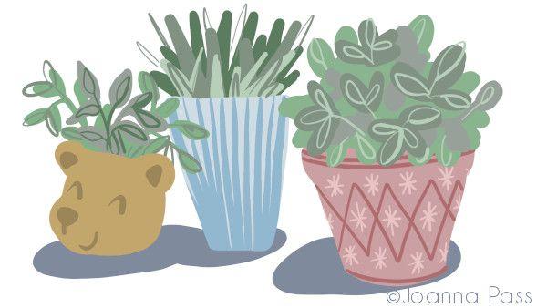 three houseplants