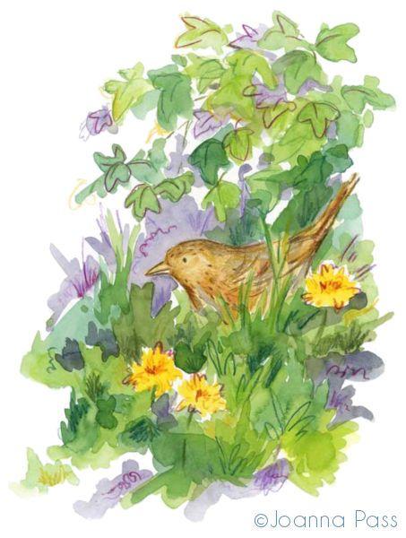dandelion blackbird