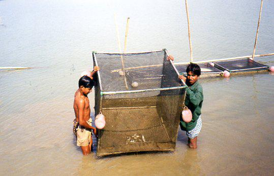 prototype finger fish farming cage