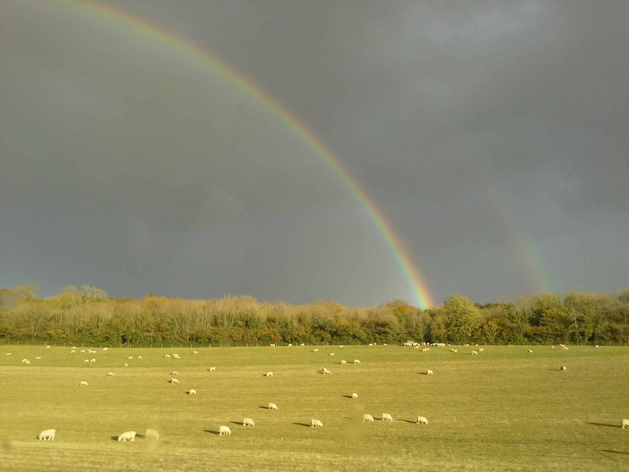 Sheep and Rainbows