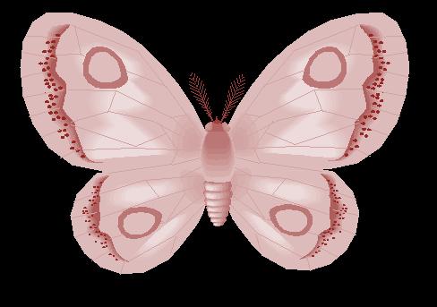 Butterfly-December