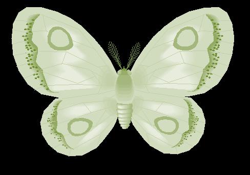 Butterfly-July