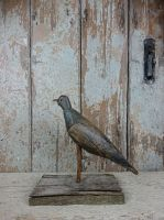 Primitive decoy pigeon