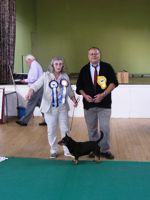 lancashire heeler club championship show 6th october  2013