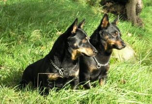 Rogan & Donny 4