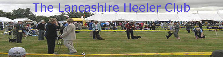 The Lancashire Heeler Club, site logo.