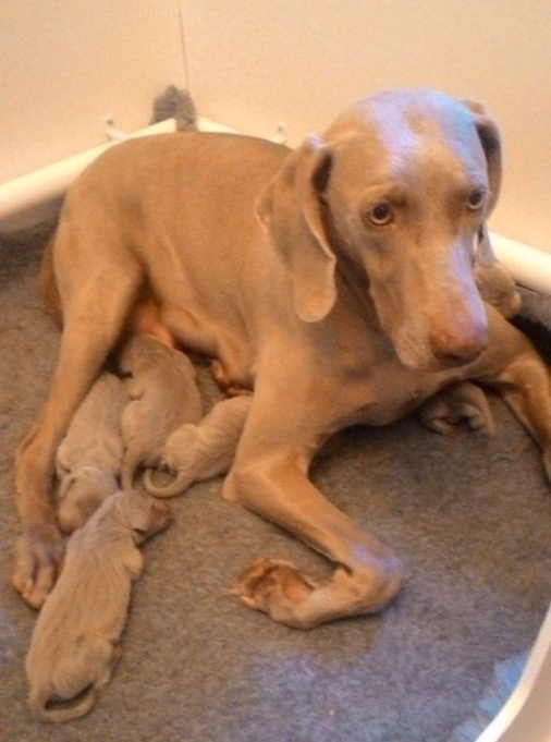 Mali's pups 24 hrs old
