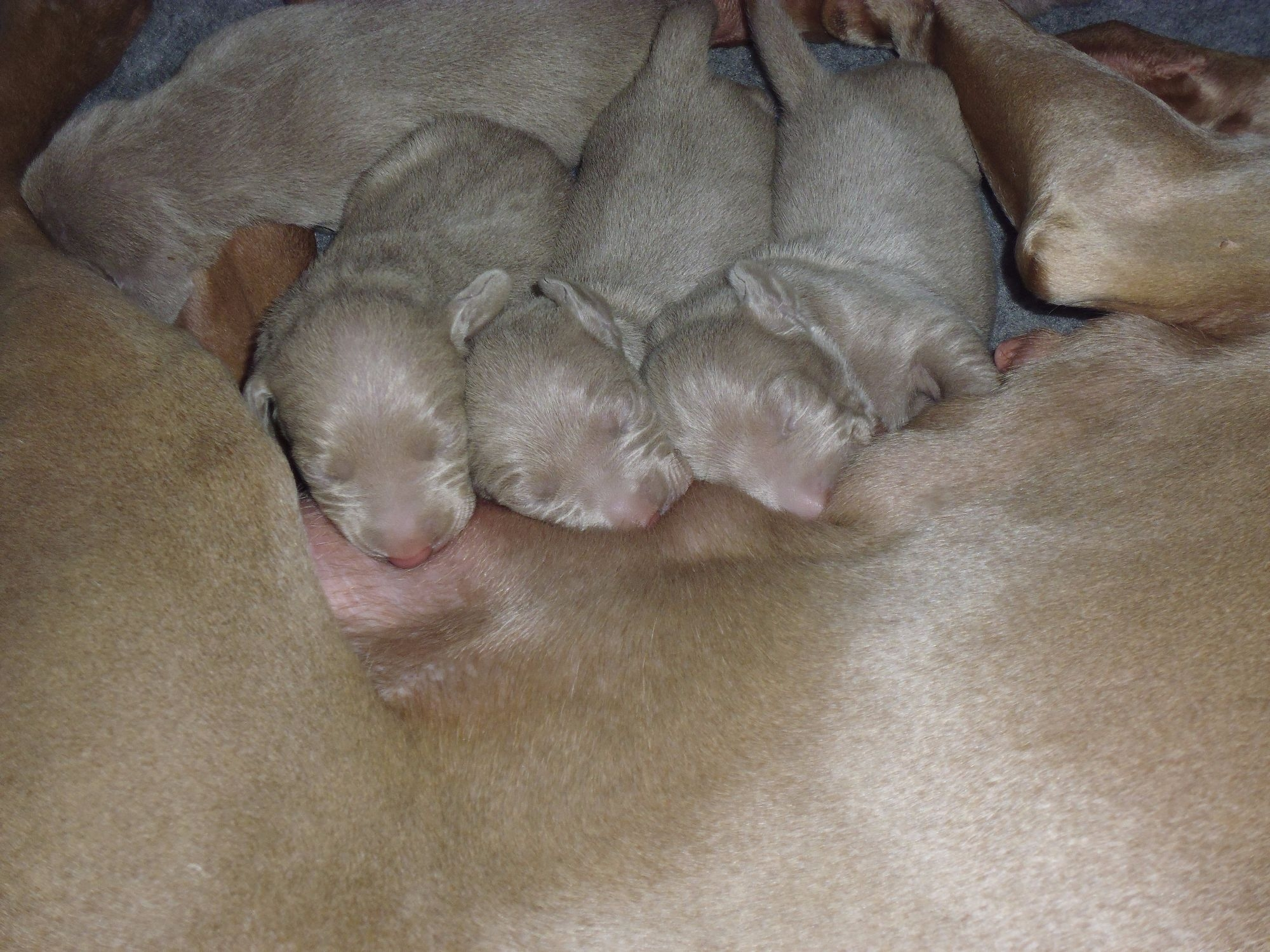Pup's 48 hrs Old