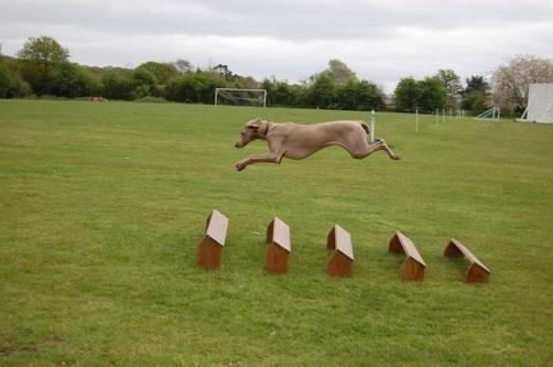 Vita Long Jump