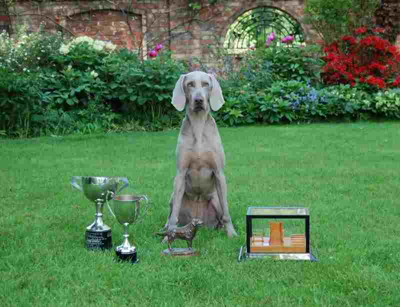 Vita with Trophys