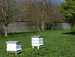 High Wood Hives