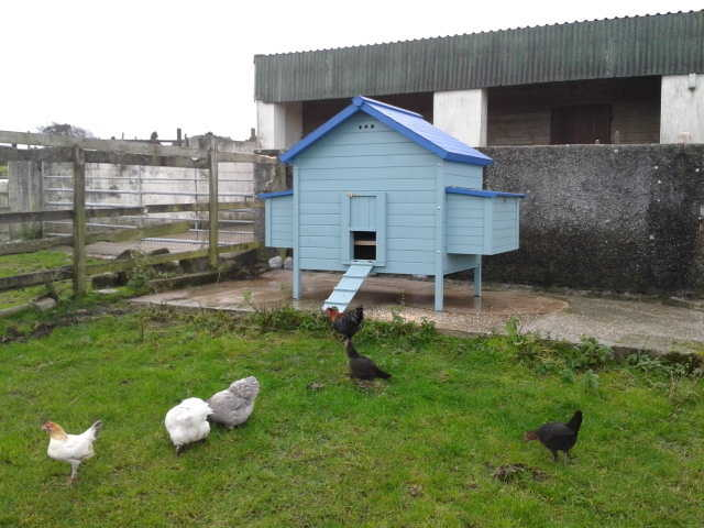 giant hen house