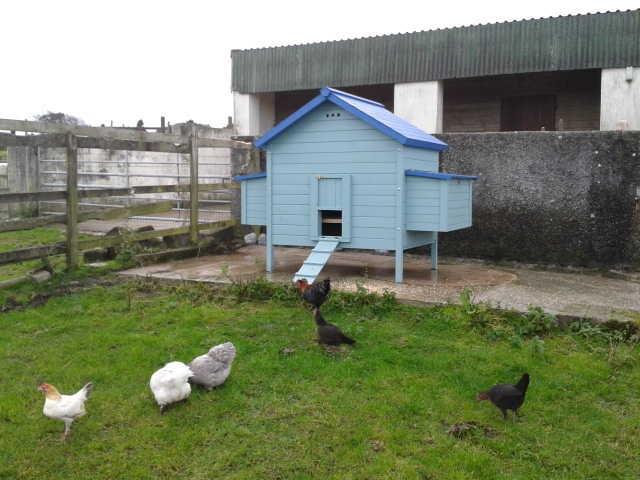 giant hen house