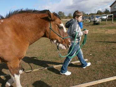 Rainbow Horses pics 012