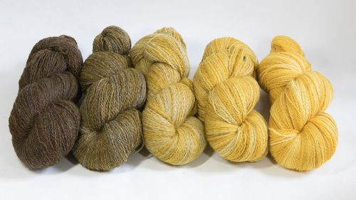 <!-- 001 -->4ply BFL and Masham Gold Ombre 18M