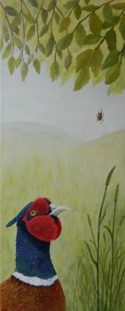 Pheasant and spider