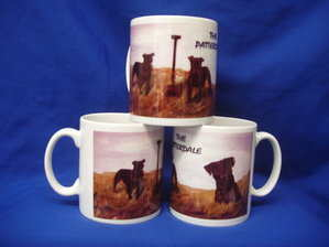Patterdale Terrier, mug