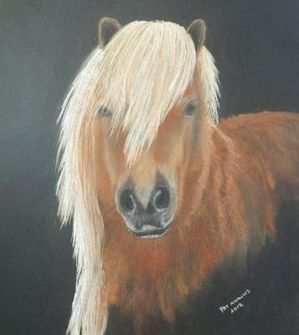 Shetland pony, soft pastel painting