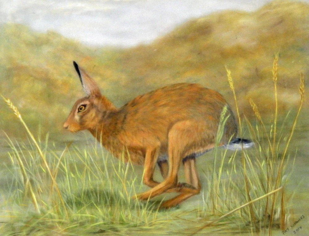 Running Hare picture