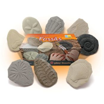 Let's Investigate - Fossils