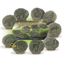 Let's Investigate - Woodland Footprints