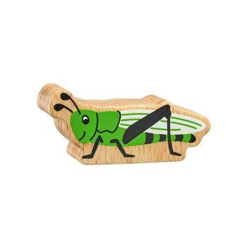 Lanka Kade - Insects, Grasshopper