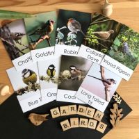 Flashcards - Birds