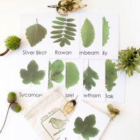 Flashcards - Leaf