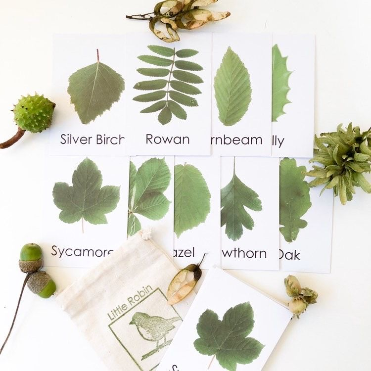 Flashcards - Leaf