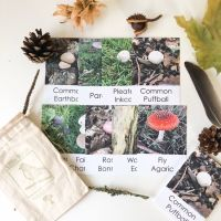 Flashcards - Mushroom