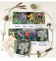 Flashcards - Wildflower