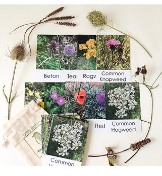 Flashcards - Wildflower