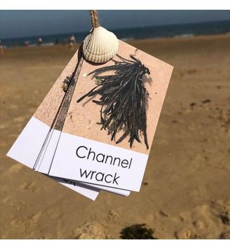 Flashcards - Beach Out & About