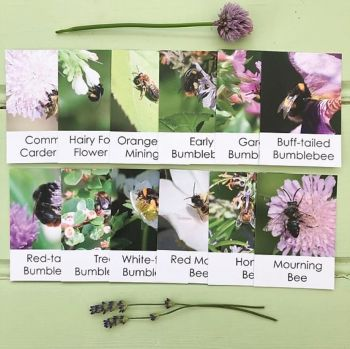 Flashcards - Bee Out & About