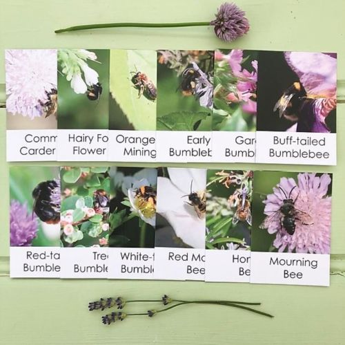 Bee Out & About Cards