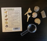 Fossil Collection with Magnifyer