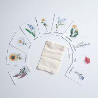 Flashcards - Wildflowers