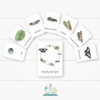 Flashcards - Butterfly Life Cycle