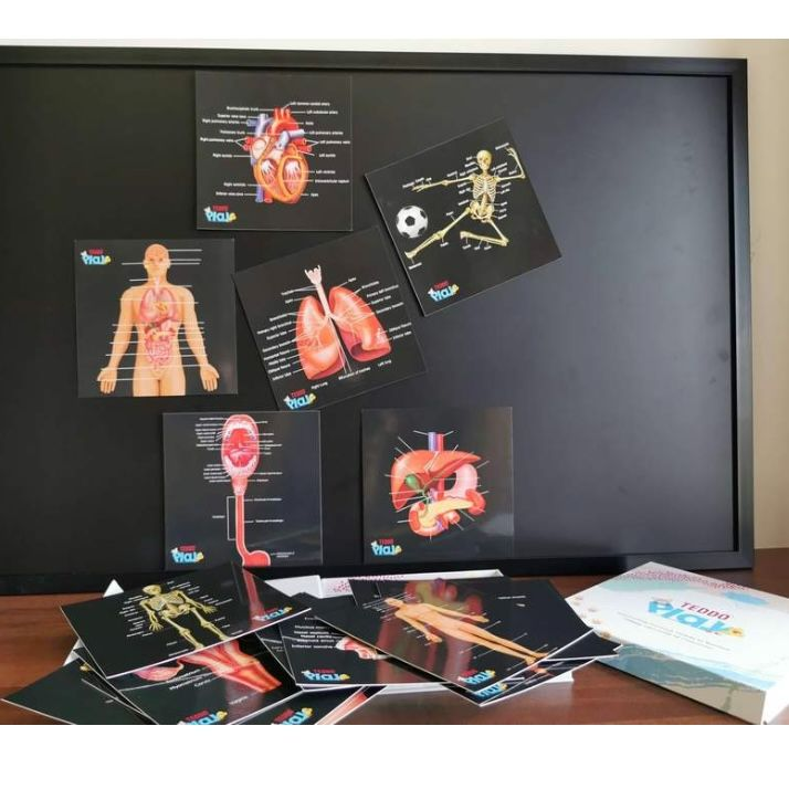 Educational Cards - Our Bodies, Inside and Out