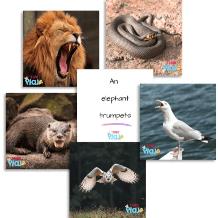 Educational Cards - What is the word for that animal sound?