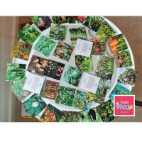 Educational Cards - Where our Food Grows?