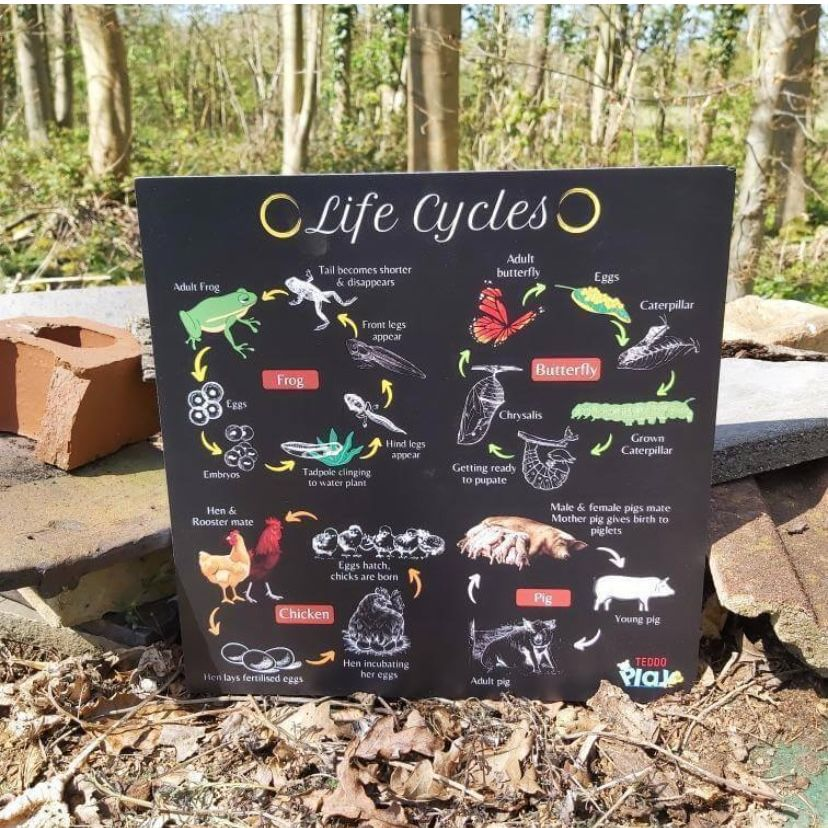 Portable Poster Board - Lifecycles