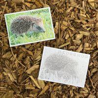 Hedgehog Flashcard/Colouring In