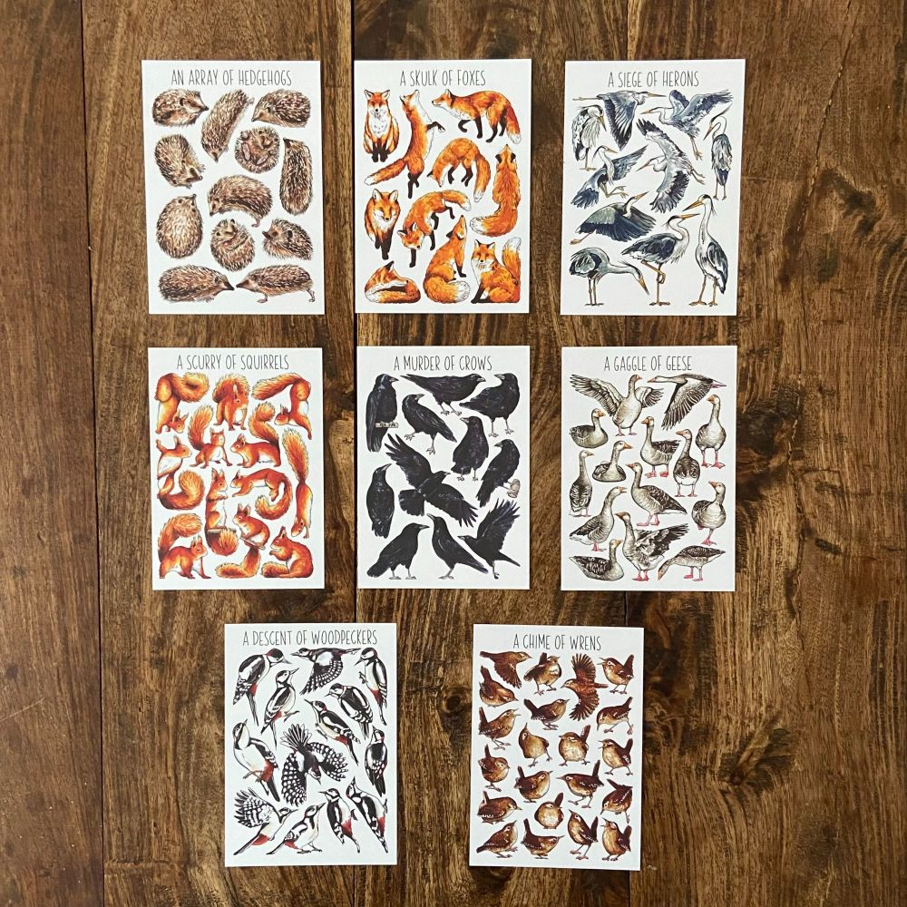 Animal Flashcards - Collective Nouns - Pack of 8